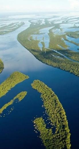 Criando conexões sustentáveis entre a Amazônia e você