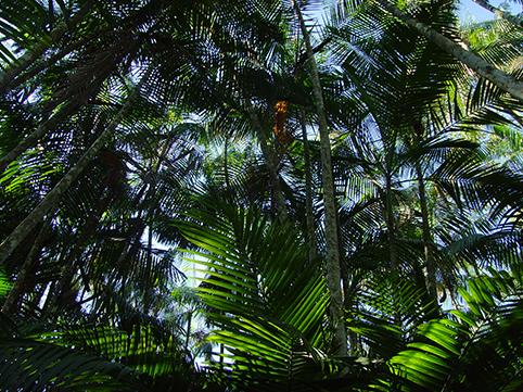 Seja um parceiro Amazônia Hub